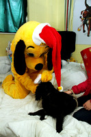 Dogs-Trust_Santa-Paws_SWP_019