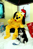 Dogs-Trust_Santa-Paws_SWP_001