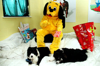 Dogs-Trust_Santa-Paws_SWP_002