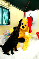 Dogs-Trust_Santa-Paws_SWP_009